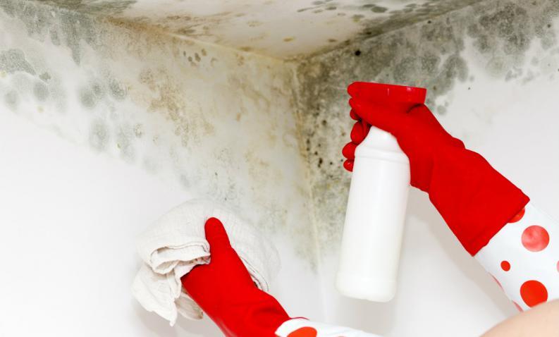 Aprende c mo pintar tu pared con humedad en s lo 6 simples - Moho en las paredes ...