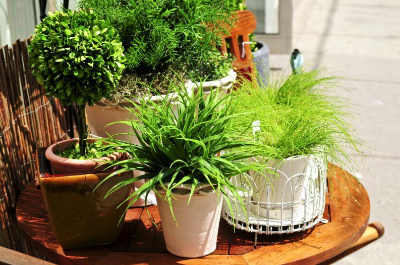 pequeo jardn es optar por plantas de hojas en lugar de plantas de flores o frutos las plantas de hojas no solo te darn menos trabajo